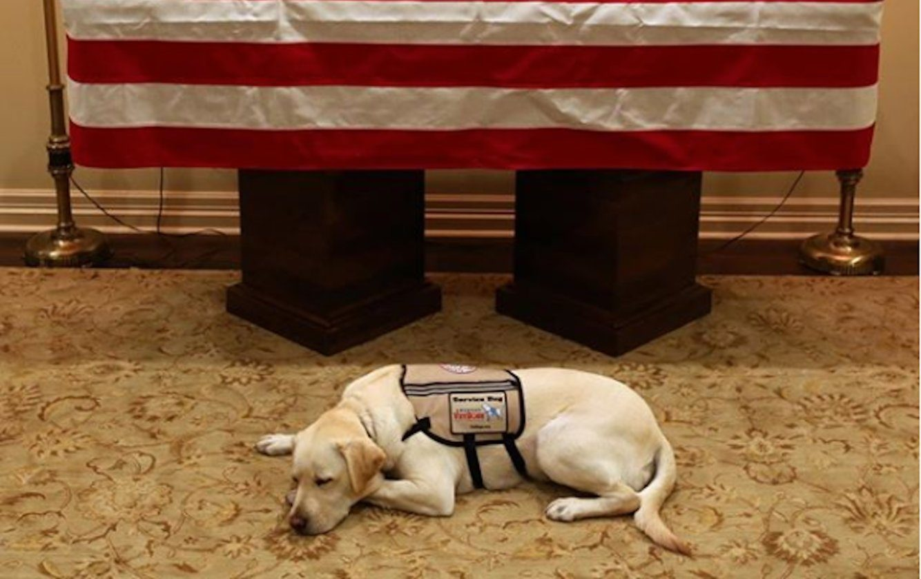 Image result for Internet rushes to defend Sully the service dog after article claims he's not grieving the death of George HW Bush